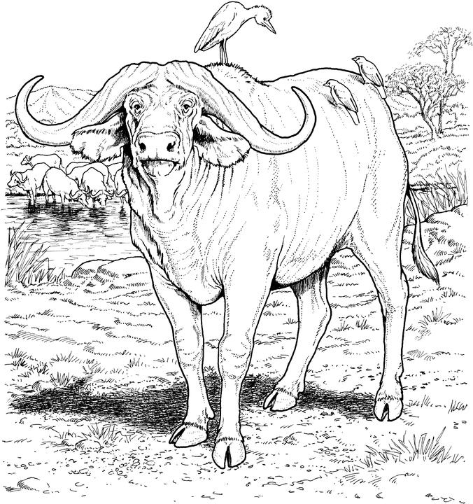 Único Animales De áfrica Para Colorear Viñeta - Dibujos Para ...