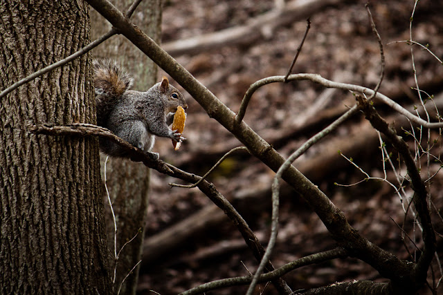Squirrel Eating Bread