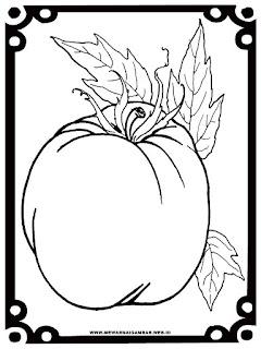 gambar mewarnai tomat
