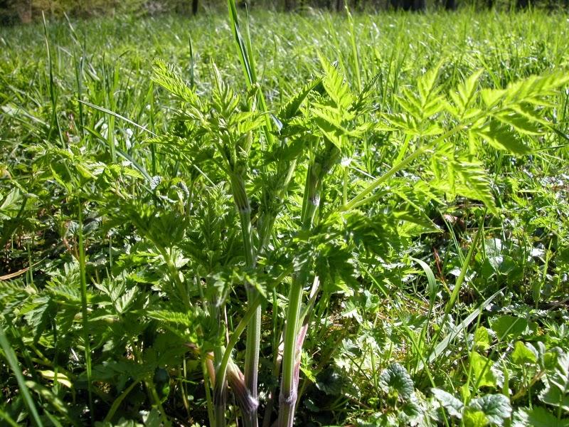 Les petites herbes avril 2015 for Plante verte dans une chambre
