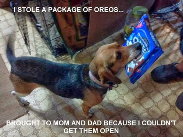 Funny Dog Carrying a Packet Of Biscuits