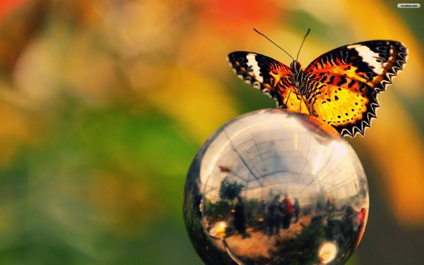 Beautiful Butterfly in Globe Images HD
