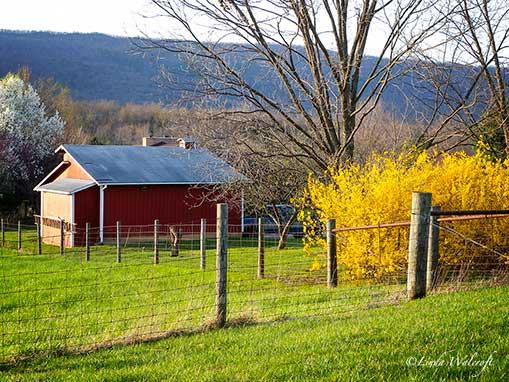 Small barn in springtime
