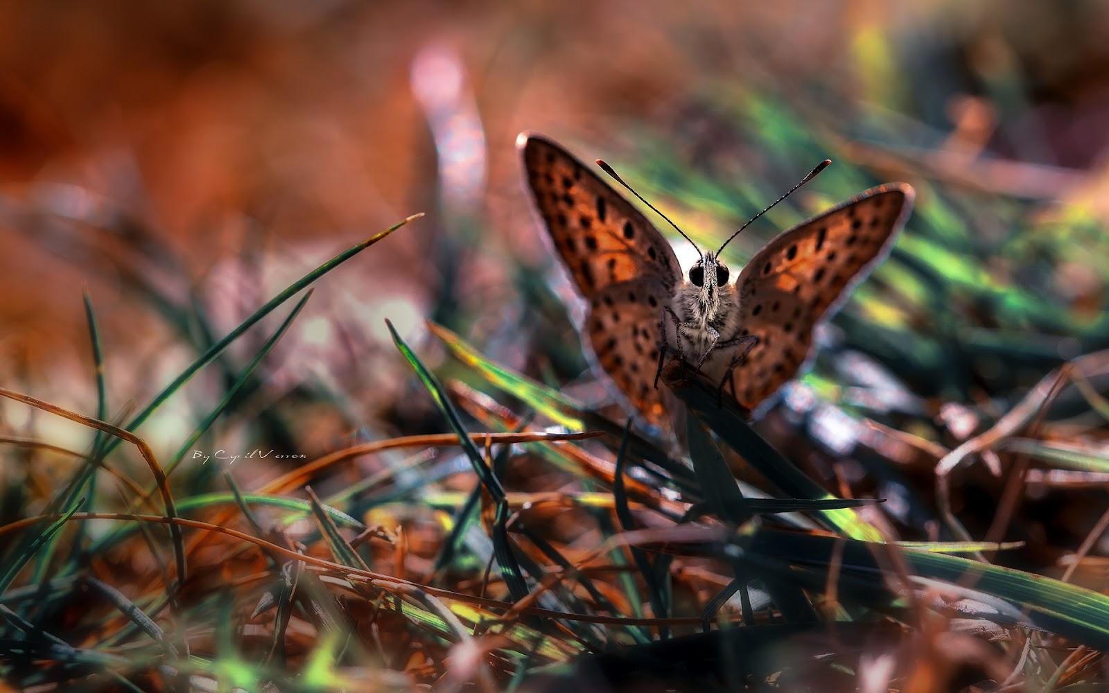 Cute Butterflies Wallpapers for Desktop
