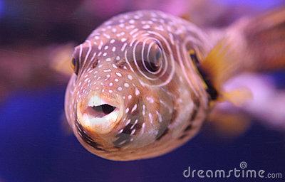 Funny tropical fish species