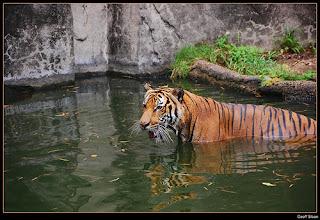ملف كامل عن اجمل واروع الصور للحيوانات  المفترسة   حيوانات الغابة  1290572989_e3bd78e2b4