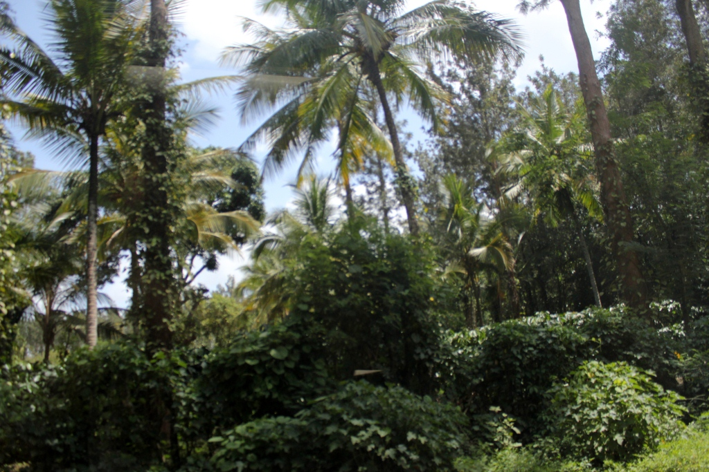 Trees in Coorg