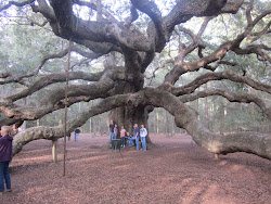 The Angel Oak