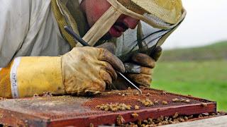 Οι Επιστήμονες Ανακάλυψαν Τι Σκοτώνει Τις Μέλισσες Και Είναι Χειρότερα Από Ότι Νομίζατε!!!
