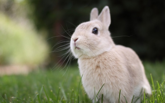 hình nền động vật dễ thương nhất