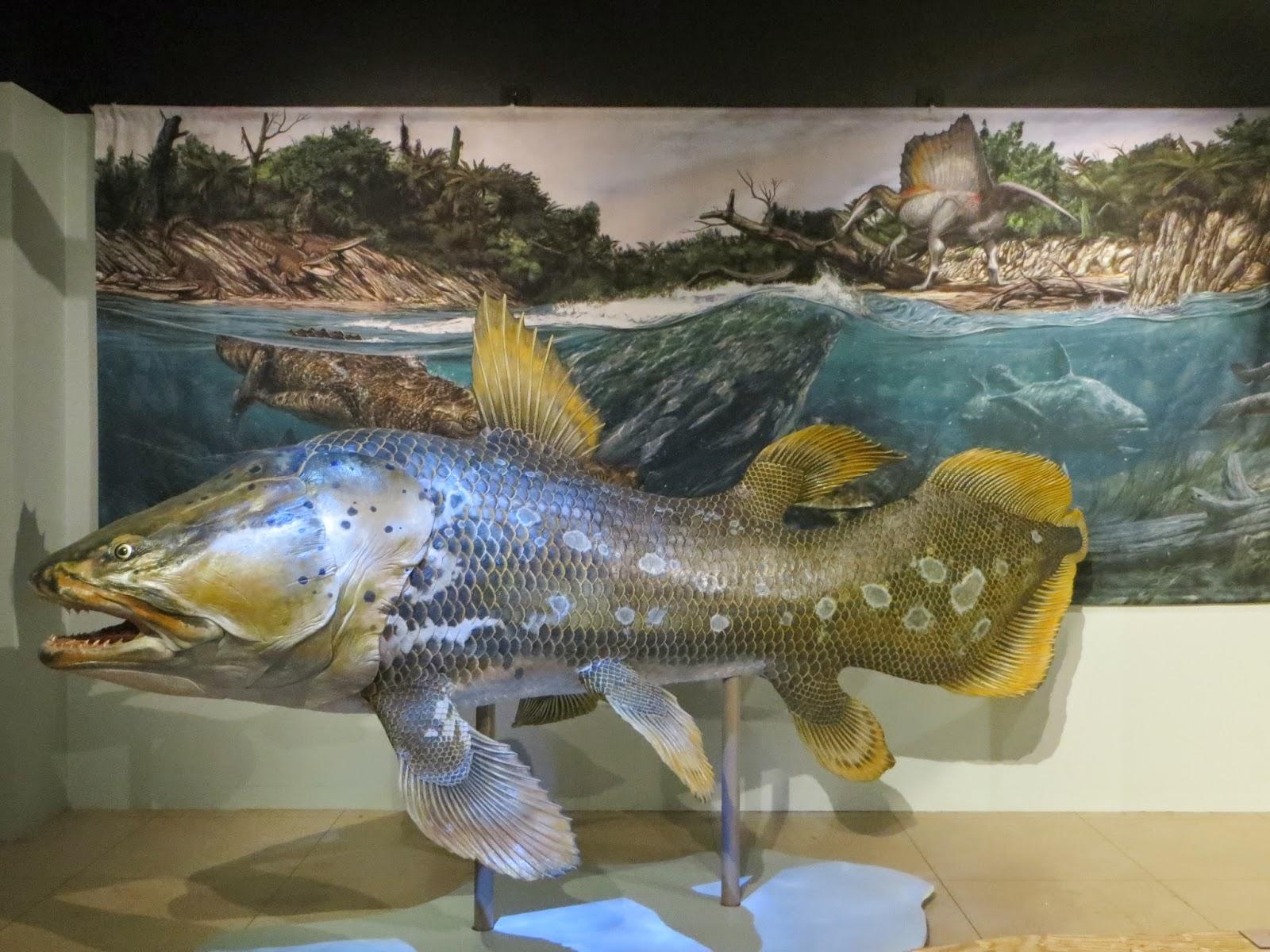newsroom earth explorers exhibition opens national geographic museum washington