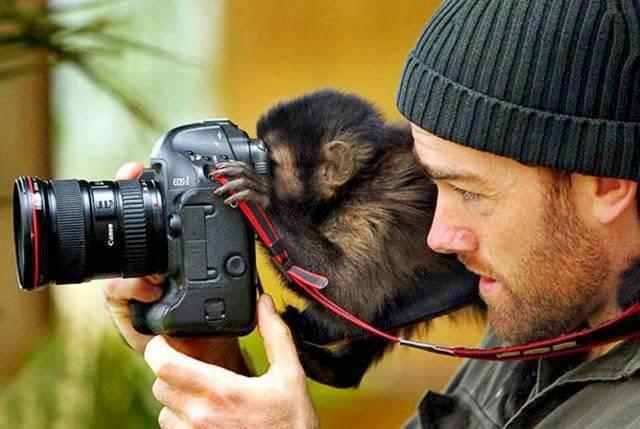 fotograful  .