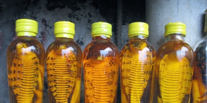 http://ariswildan.blogspot.com/search/label/makanan%20dan%20minuman