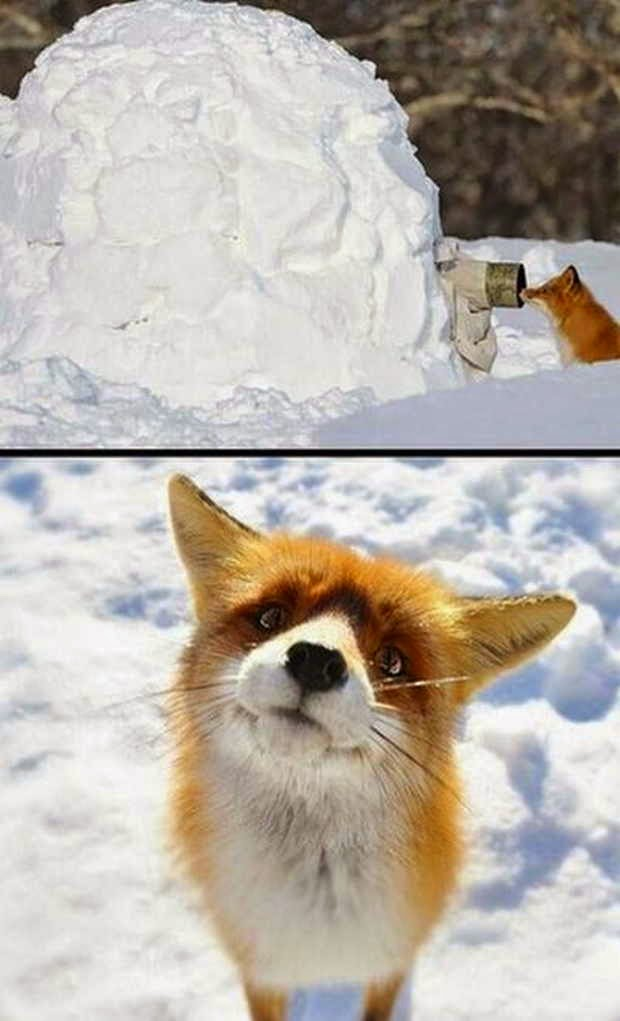 Funny animals of the week - 1 May 2015, best funny animal picture, animals photos