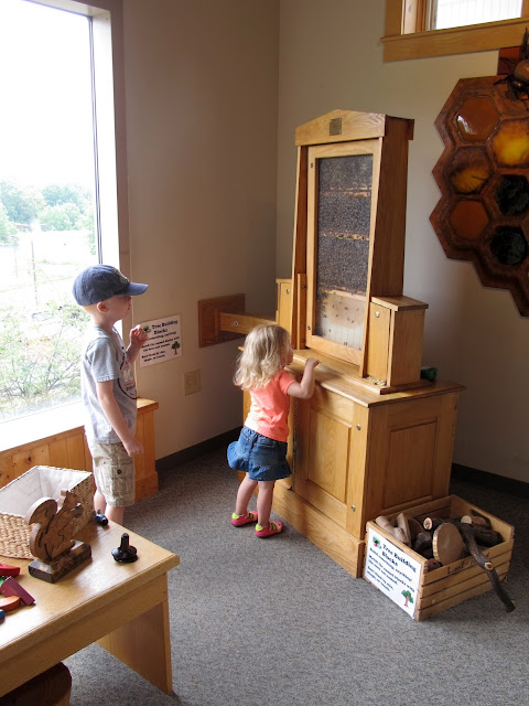 Indoor Bee Exhibit at The Wilderness Center