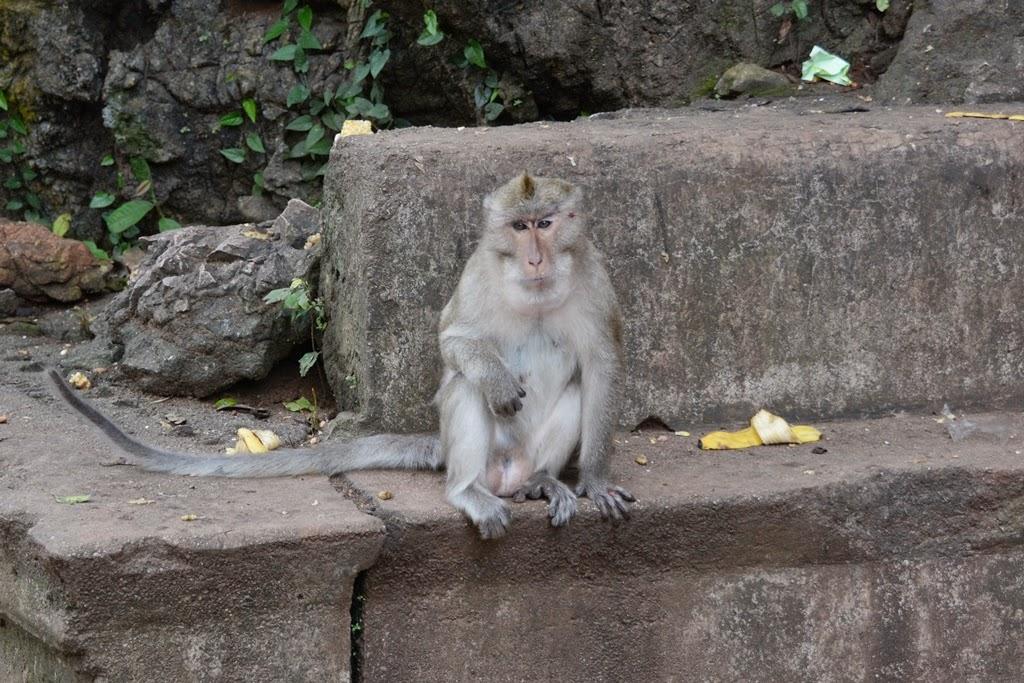 Watsuwankhuha Cave Phang Nga monkey