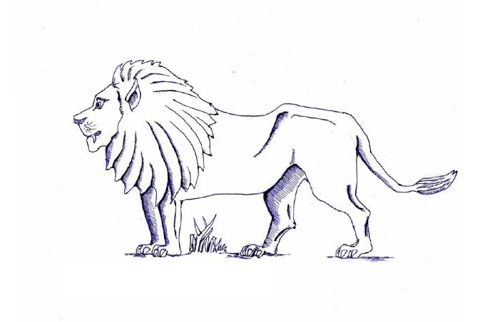 الأسد ملك الغابة يمشي بشموخ بصورة مفرغة للتلوين