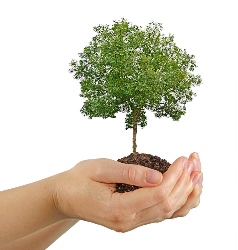 Bio baby sabes como plantar un rbol for Arboles para plantar en invierno