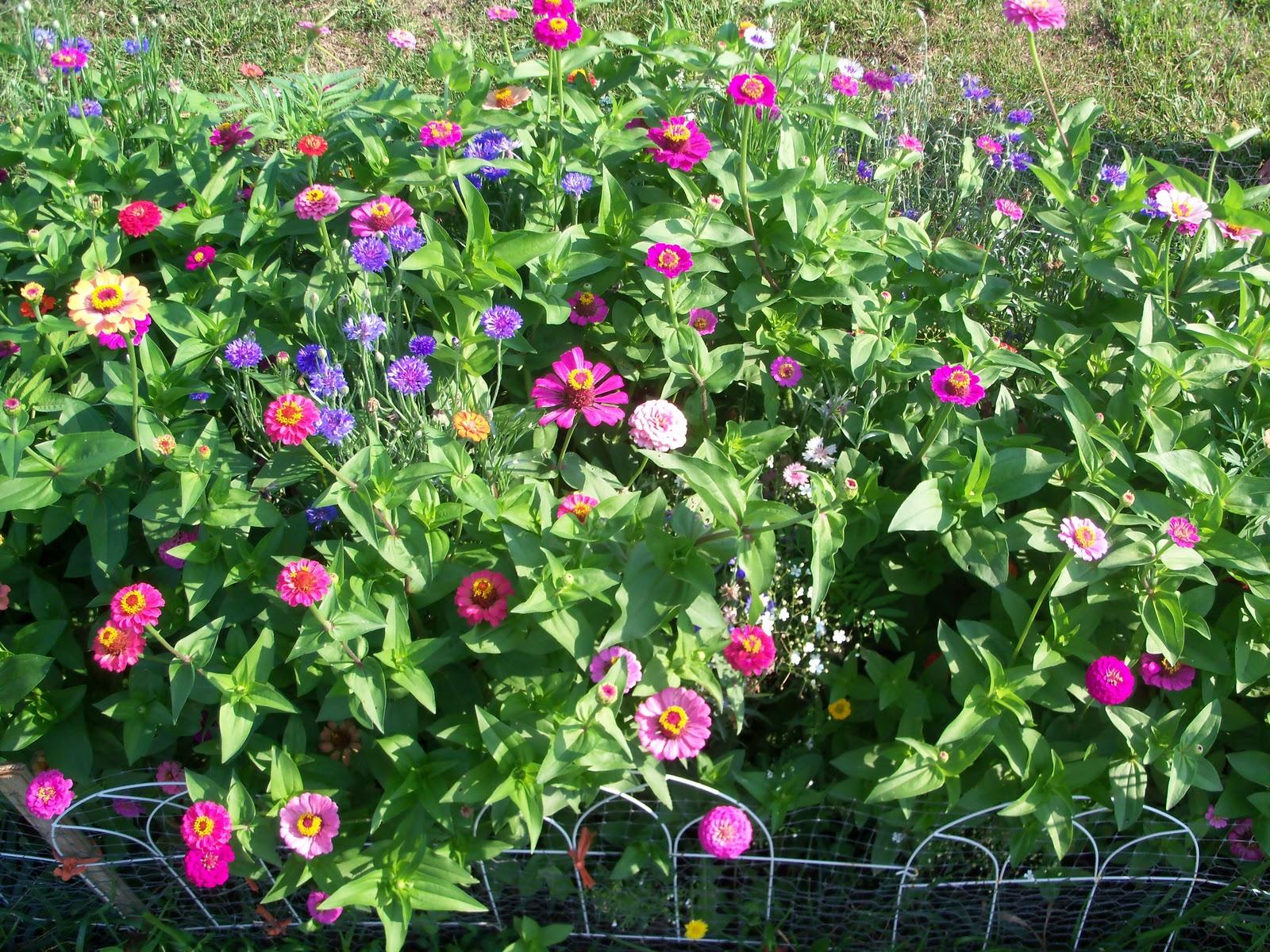 Flower Garden ( How To Grow )  Garden The Easy Way