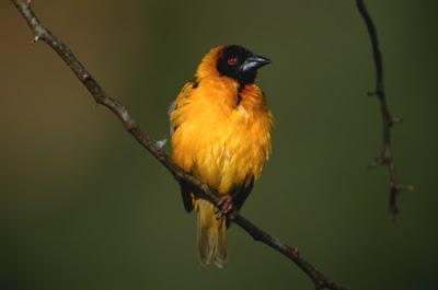 "Gillette Sand Dune Visitor Center hosts ""Michigan Birds"" photo contest, now through April 27"