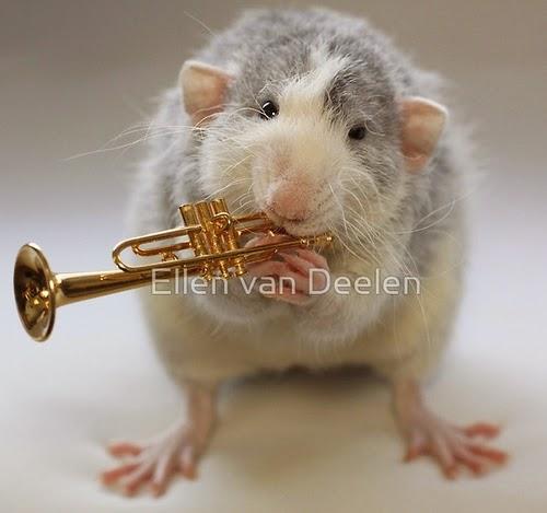 10-The-Trumpet-Player-Musical-Dumbo-Rat-Ellen-Van-Deelen-www-designstack-co
