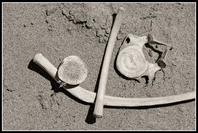 Nova Scotia; Hirtle's Beach; Porpoise; Bones