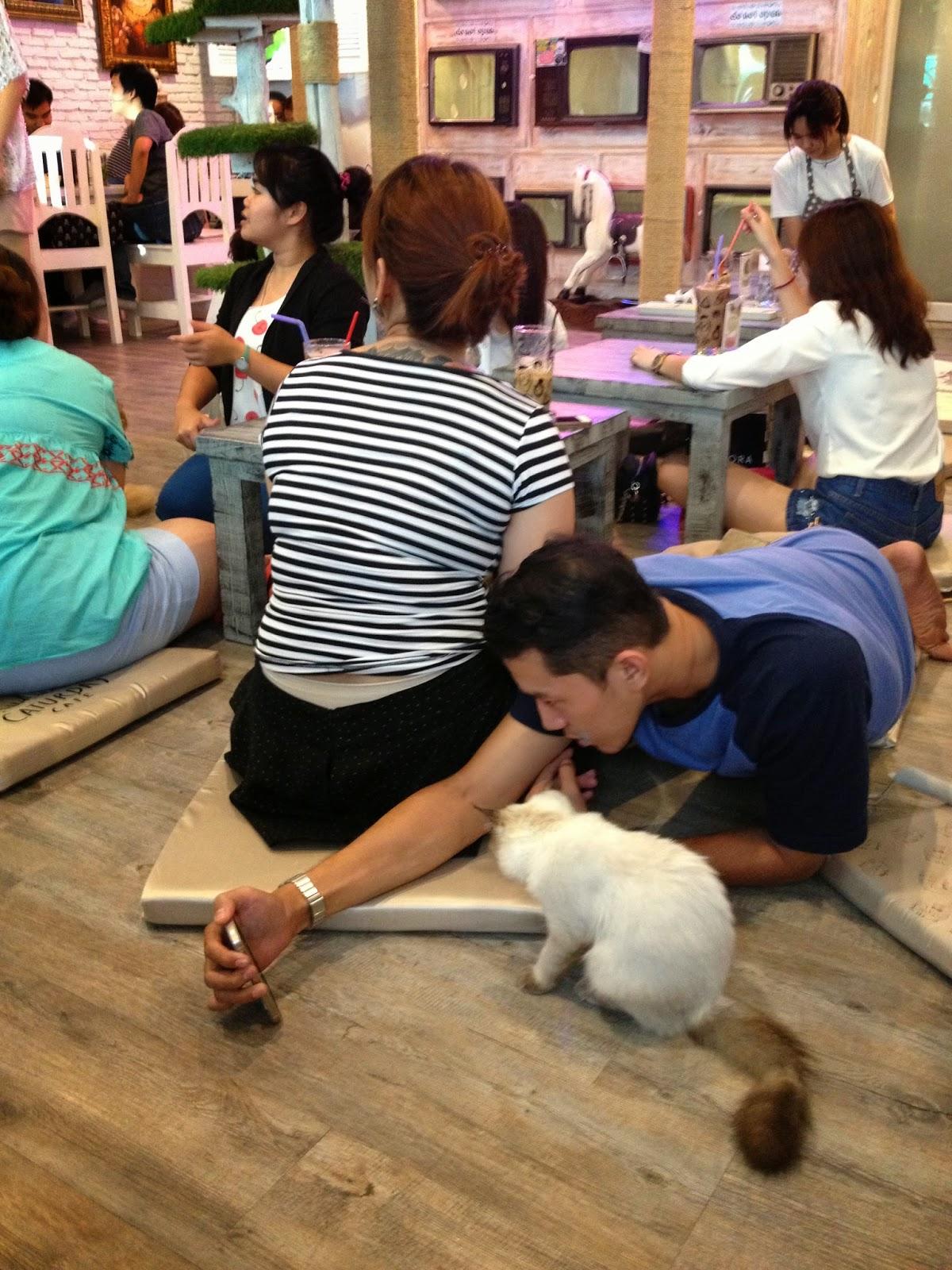 kočky, milovníci koček, blog o kočkách,blog o Thajsku, Sirocco Bangkok, restaurace Bangkok, Lebua Bangkok, Lebua Thajsko, Sirocco Thajsko, The Dome Thajsko, blog o bangkoku, thajský blog, kam zajít v Bangkoku, co navštívit v Bangkoku, co navštívit v Thajsku, nejlepší místo v Bangkoku, kde se natáčela Pařba v Bangkoku, Pařba v Bangkoku,thajská kultura, thajsko, thajsko bez cestovky, thajsko na vlastní pěst, thajky, thajská seznamka, blog o thajsku, thajský blog, život v thajsku, cestování po thajsku, cestování bangkok, bangkok na vlastní pěst, fashion house, fashion house blog, fashionhouse.cz, www.fashionhouse.cz, češka žijící v zahraničí, češi v Asii, ubytování bangkok, cestovní rádce bangkok, život v zahraničí, blog o cestování, blog o životě v Thajsku, práce v Thajsku, víza do Thajska, kadeřnictví, kadeřnictví v Thajsku, dovolená v thajsku, bydlení v thajsku, czech expats, český blog, nejlepší český blog, kam zajít v Bangkoku, kočičí kavárna