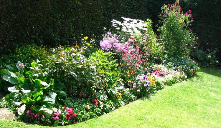 Home Decors Idea Basic Gardening Tips for Beginners