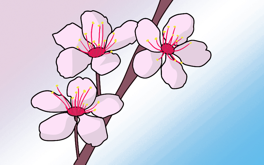 Simple cherry blossom branch drawing