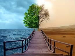 Keseimbangan lingkungan adalah