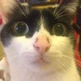 mi gato jeison