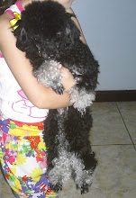 Essa linda Poodle Toy  a Docinho!