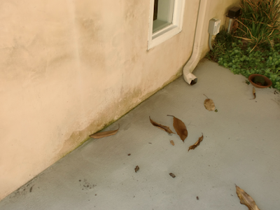 How to Prevent Mold in the Home After Water Damage