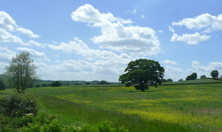 A meadow in the English countryside.