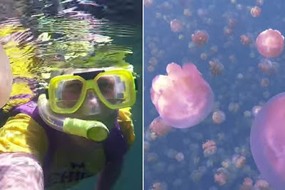This man enjoys swimming through millions of jellyfish