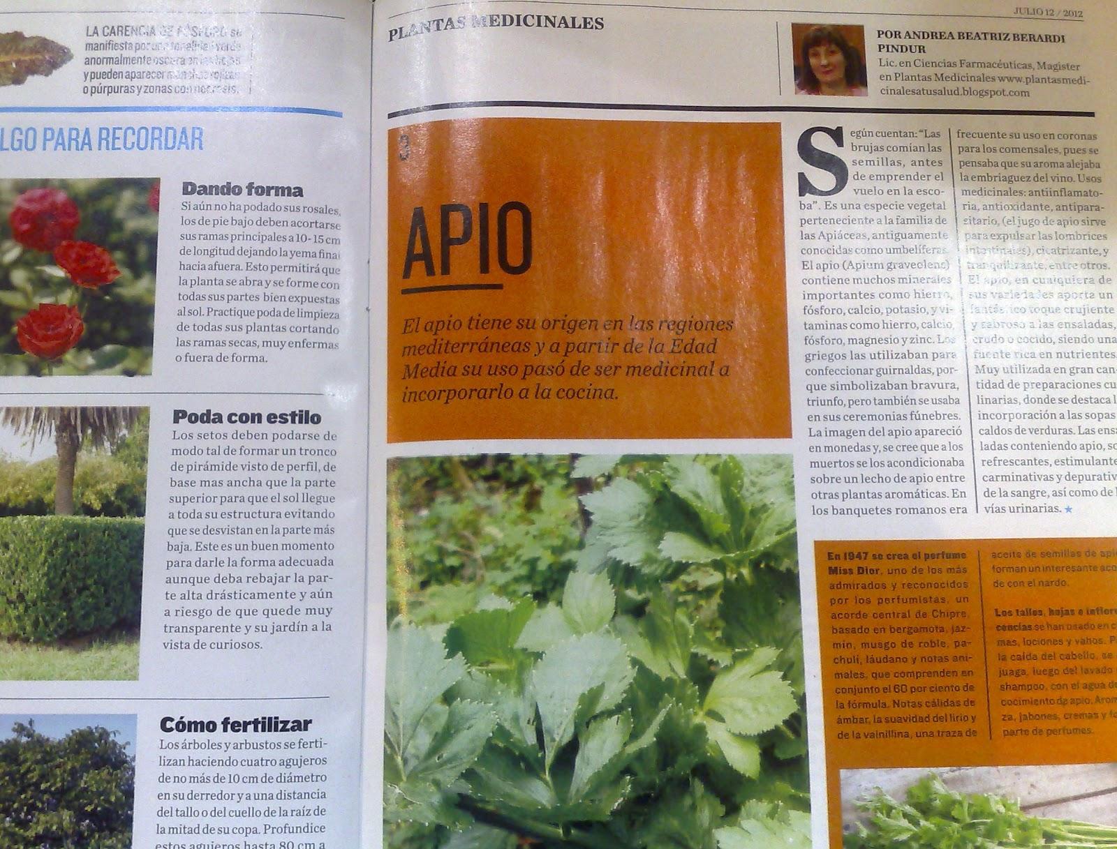 Plantas para acido urico elevado leer m s art culos - Alimentos prohibidos vesicula ...