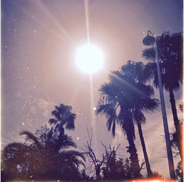 palms & sun