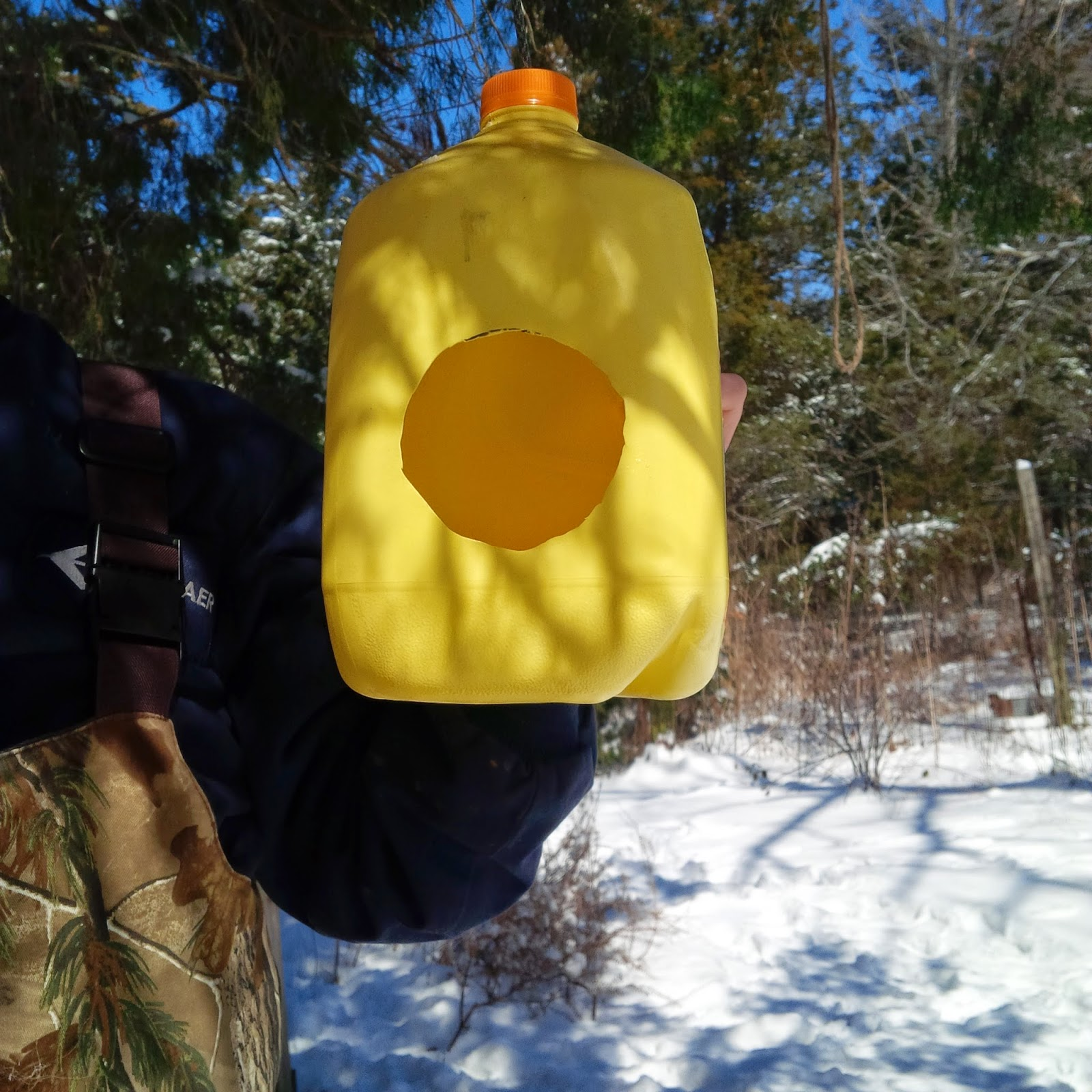 hanging the milk jug bird feeder from a branch