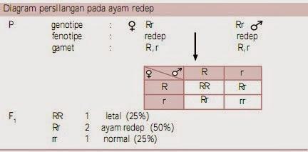 Diagram persilangan pada ayam redep