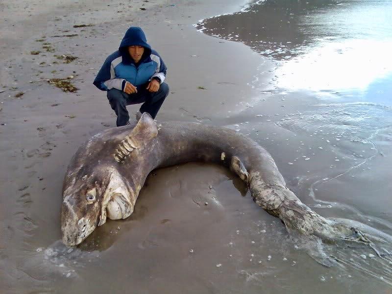 shark vs shark