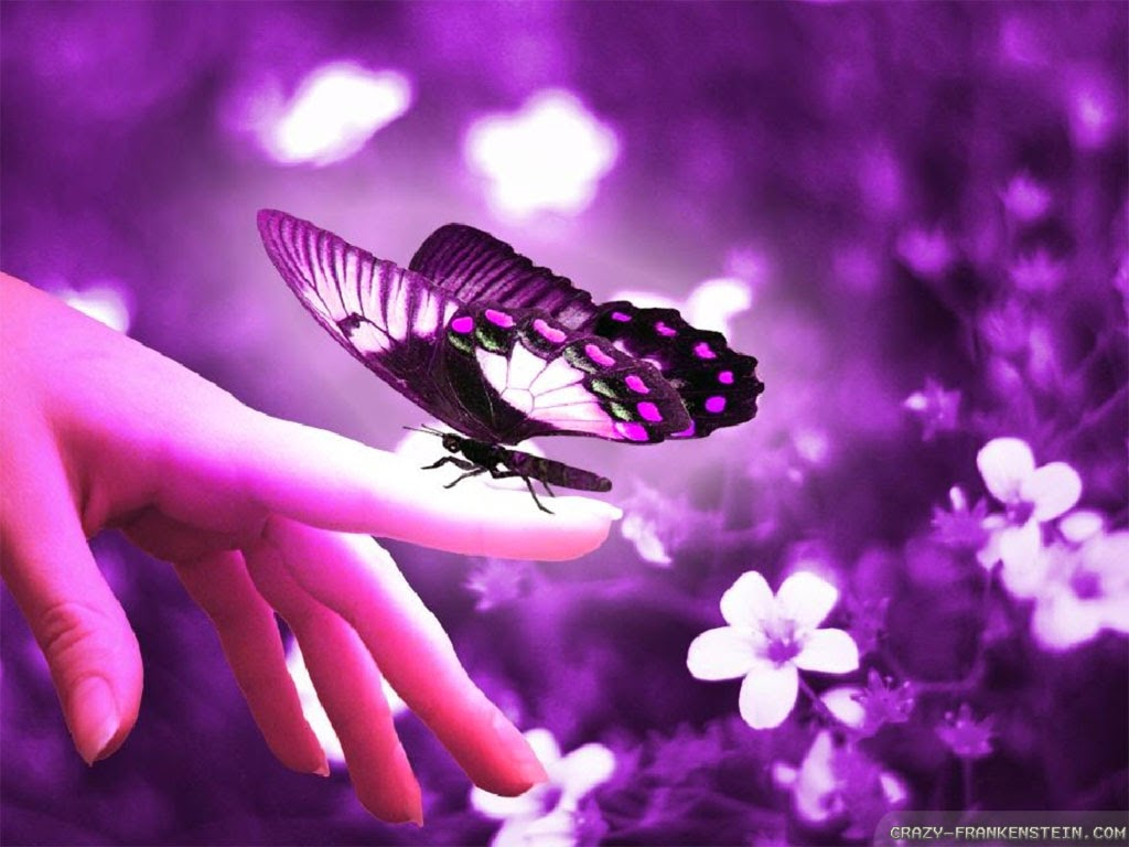 beautiful butterfly wallpapers - Mobile wallpapers