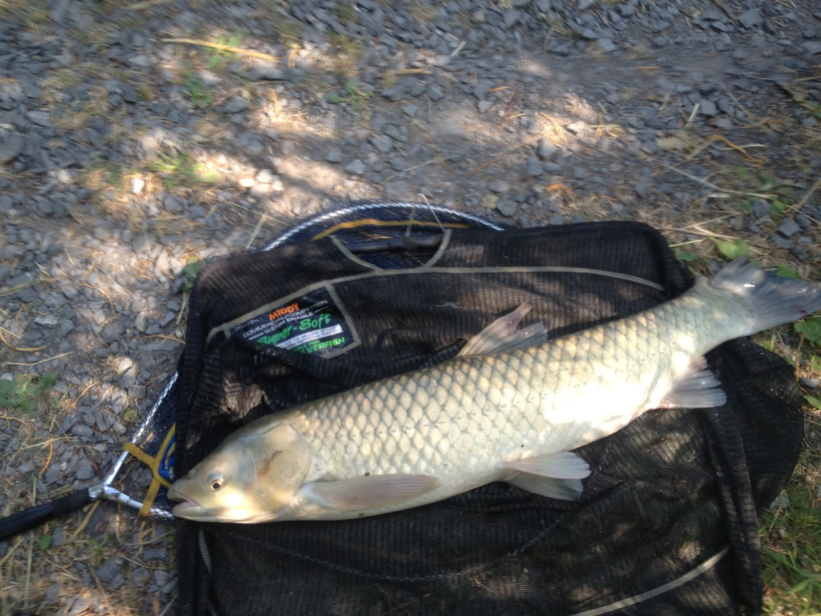 Part time match fishing avon angling float only 2013 for Hubbards fishing float