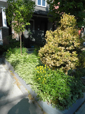 The Pocket front garden renovation before Paul Jung Gardening Services Toronto