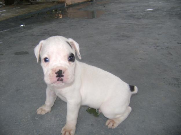 Puppies Dog Breed Info...