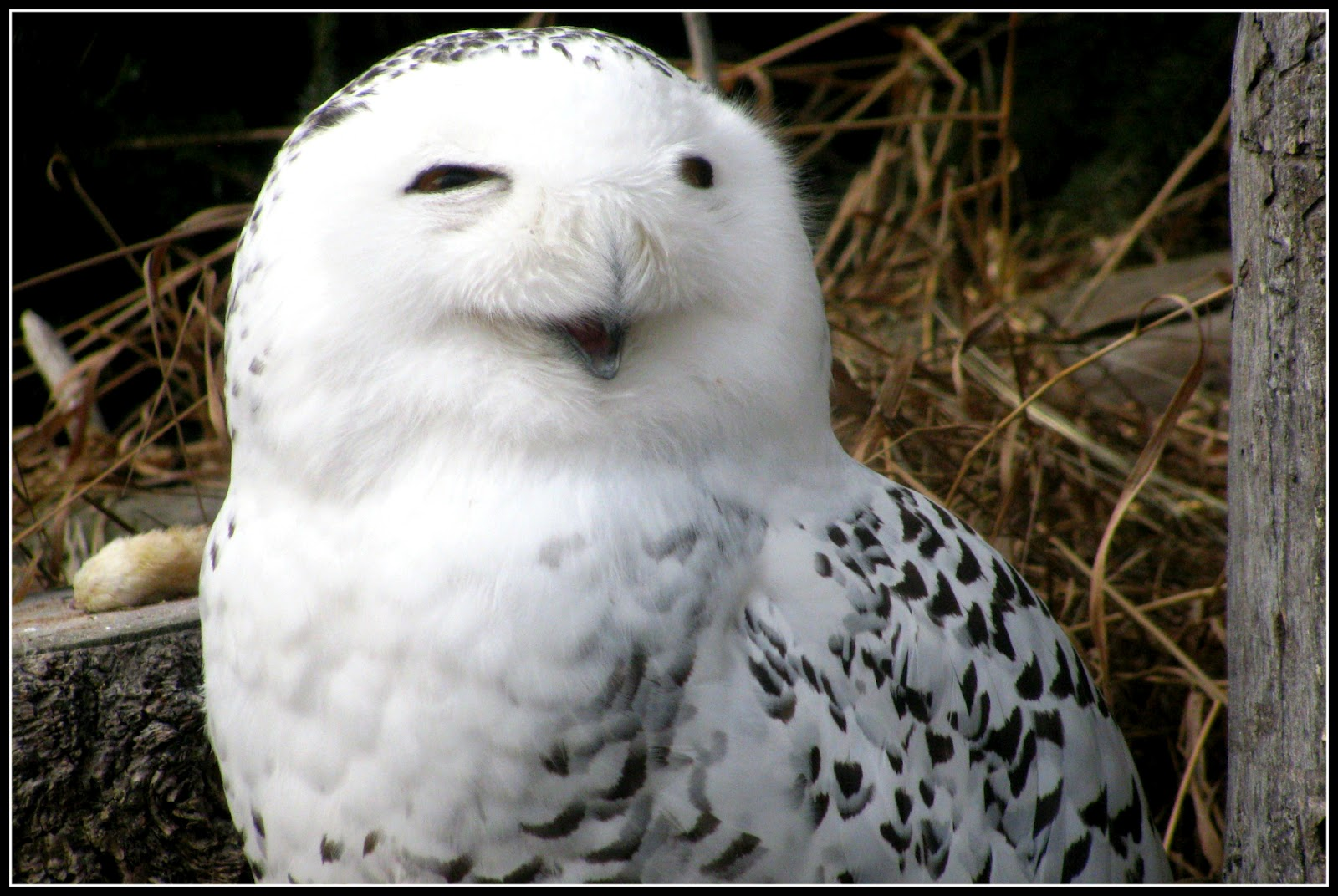 ... smiling animals smiling owl clipart smiling owl creepypasta smiling