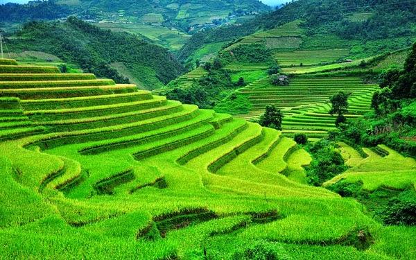 Vietnam Beautiful Terraced Fields