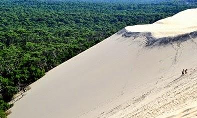 Pasir menelan Hutan Menjadi gurun