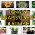 Pokok-Pokok Hiasan yang Sesuai Ditanam di Dalam Rumah Untuk Lawan Jerebu