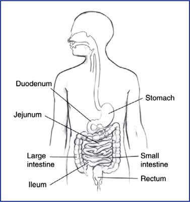 Gambarajah usus kecil dan usus besar