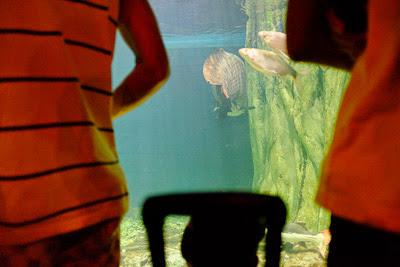 ikan gergasi